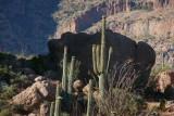 Saguaros on top of Magma Ridge against Picketpost Mountain