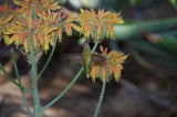 Hummingbird on Aloe flower