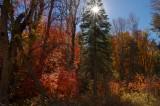 Ferndell Spring Trailhead