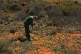 2012 Johnny taking photo of poppies at Peridot Mesa. San Carlos Reservation