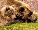 Bears_In_Camp_F9A0043.jpg