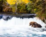 Bear_Jacuzzi_F9A0473.jpg