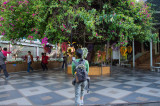 Chiang-Mai_Doi Inthanon