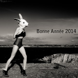 Happy New year 2014 with the white Rabbit