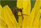 bestuiving... - pollination