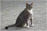 een van de katten van Lies