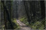 het mooiste voorjaarsbos van Nederland