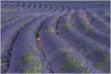 Provence - Vaucluse - Lubéron