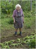 Lies, 86 jaar,  in haar moestuin