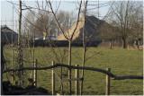 twee nieuwe bomen aangeplant