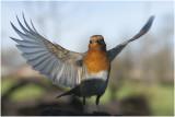 experiment vogelfotografie