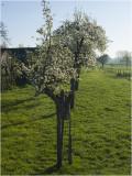 73 jarige Perenboom