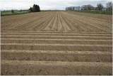 aardappelruggen - potatofield
