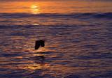 Heron silouetted against sunrise.jpg