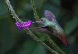 Humming bird and flower copy.jpg