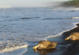 Returning to the sea copy.jpg