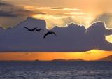 Pelican sunset copy.jpg