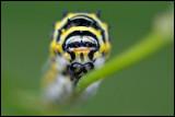caterpillar on flower stem