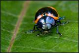 bug on wet leaf