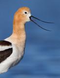 Birds of North America (including Hawaii)