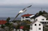 Northern Norway2009_16.jpg