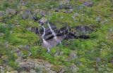 Northern Norway2009_18.jpg