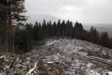 near Zuberec,1100m