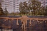Racines métalliques_Metal roots