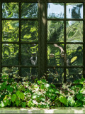 Fenêtre déformée_Deformed window