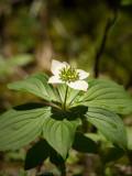 Fleurs sauvages / Wild flowers