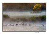 Dawn, Slate Run Pond