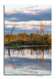 Evening Roost at Pickerington Ponds