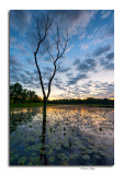 Dawn, Buzzrd's Roost Lake, Slate Run