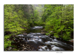 Great Smoky Mountains National Park Spring 2015