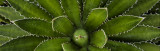Dont Touch -  Agave Spines 7187.jpg