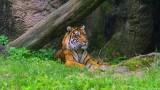 Louisville Zoo