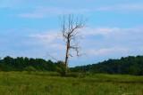Kentucky Meadow June 2013.jpg