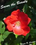 Savor the Beauty 6-13 07.jpg