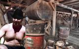 dad working barn shirtless.jpg