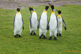 Volunteer Point Penguins