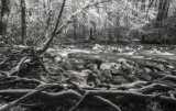 Smoky Mountain Stream in  Winter