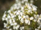 Very Small Wild Flowers