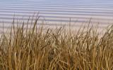 Reeds & Ripples.jpg