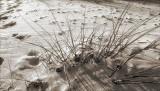 Florida Dunes