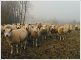 Nature & Rural life  2005