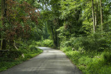 Forest Road2