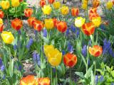 New York Spring 2013
