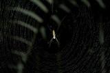 Spider Cuyabeno