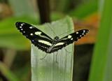 Butterfly Mashpi