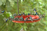 Hummingbirds Buenaventura